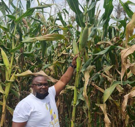 Nord-Kivu: «La semence des maïs ZM 625 se comportent bien dans des champs des partenaires de Premilog» (Ir. Simon Kazungu)